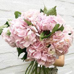 WEBSTA @ plumprettysugar - Happiness is 🌸 No Rain No Flowers, Love Flowers, My Flower, Flower Power, Beautiful Flowers, Gift Flowers, Pink Hydrangea, Blush Flowers, Pink Roses
