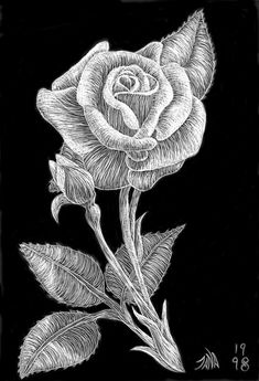 Scratchboard...following contour of petals and leaves to create form.