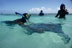 Awesome Activities in #Antigua and #Barbuda: Stingray City | via @caribbreantrav #Caribbean #adventure #marinelife