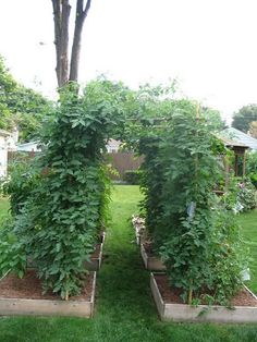 how to make a tomato arbor - Tomatoville® Gardening Forums