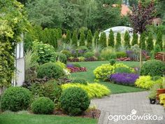 Ogród mały, ale pojemny;) - strona 88 - Forum ogrodnicze - Ogrodowisko
