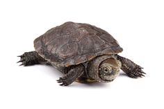 Ayez toujours sous la main un lombric pour faire plaisir à votre tortue. Ils sont riche en protéines et il aideront à diversifier son alimentation. En fessant du lombricompostage vous réutiliserez vos déchets de table pour faire l'élevage de vos vers de terre.