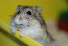Cute Hamster!