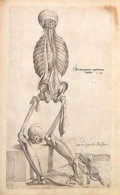 Anatomical drawings of   Andreas Vesalius (1514 - 1564)