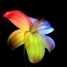 rainbow flower See my art https://www.facebook.com/ZRFractals  http://www.facebook.com/craftwebdesigns