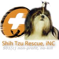 Shih Tzus and a variety of smaller and larger pure breed and mixed breed dogs for adoption in South Florida. Find your new forever friend, start your search here. Select by breed, gender, size or even name of the dog you are looking for. Biewer Yorkie, Shitzu Puppies, Cocker Spaniel Puppies, Yorkie Puppy, French Bulldog Puppies, Havanese, Small Dog Rescue, Rescue Dogs For Adoption, Small Dogs