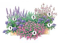 Diese Pflanzideen für Balkonkästen haben eines gemeinsam: Jede der Mischungen enthält auch Sommerblumen oder Kräuter, die duften. Neben dem herrlichen Blütenschmuck fürs Auge wird so auch die Nase verwöhnt.