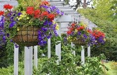 The Ultimate Guide to Hanging Baskets http://www.ambius.com/blog/ultimate-hanging-baskets-guide/