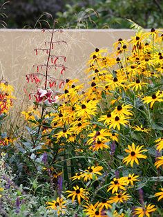 Perennial Rudbeckia offers beautiful sunny hues -- yellow or orange flowers depending on the variety . Plus, they offer long-lasting cut flowers for bouquets. These prairie natives are easy care, drought-tolerant, deer-resistant, and attract butterflies. Zones: 3-11