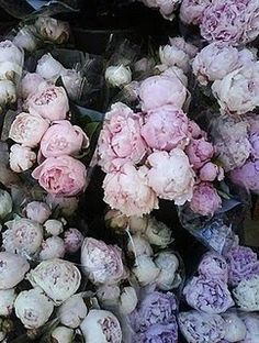 Peonies | AnOther Loves