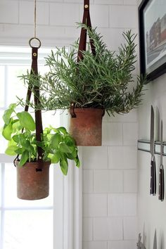 Inspiring and Natural DIY Hanging Plants for Your Home. Inspiring and Natural DIY Hanging Plants. Ornamental Plant Pots Hanging Walls - Today the price of land is very expensive, therefore houses have limit. Hanging Herb Gardens, Hanging Herbs, Herb Garden In Kitchen, Kitchen Herbs, Green Kitchen, Plants In Kitchen, Kitchen Decor, Diy Hanging Planter, Planter Pots