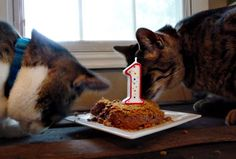 Birthday Cake for the Cat Sweet Recipes Pinterest Birthday