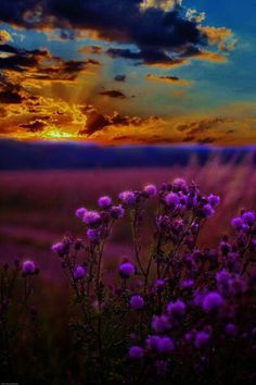 Sunset with purple flowers