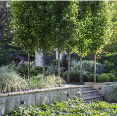 Drifts of plants under ornamental pears for dappled shade in the summer garden | Peter Fudge