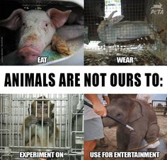 Animals are NOT ours to use.