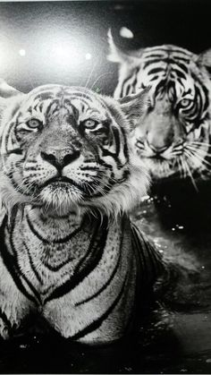 Great pictures David Yarrow in Amsterdam.