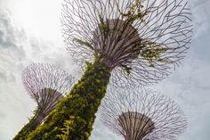 Singapore: Gardens by the Bay – Supertrees (Photo: Loz Blain)