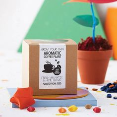 Grow Your Own Coffee Plant Kit from notonthehighstreet.com