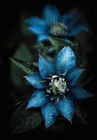 fabulous, blue. Live lusciously with LUSCIOUS: www.myLusciousLife.com