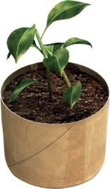 Seed-starter pots using TP rolls