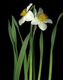 Fiori Gialli Invernali.Fiore Bianco E Giallo Come Si Chiama Fiore Invernale Bianco
