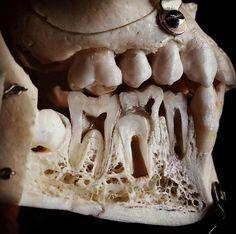 Sassy Dental Office Forms Most people are aware that brushing their teeth twice Dental Hygiene School, Dental Life, Dental Humor, Dental Assistant, Dental Hygienist, Dental Health, Dental Anatomy, Medical Anatomy, Dentist Cartoon