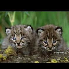 b45d29a131bb The 74 best cute images on Pinterest   Adorable animals, Animals ...