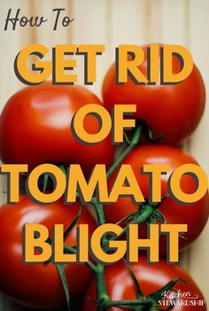 Wonderful tips for prevention and removal. sanitize garden to get rid of blight; keep blight away from garden next season; Growing Tomato Plants, Growing Tomatoes In Containers, Growing Veggies, Grow Tomatoes, Cherry Tomatoes, Baby Tomatoes, Organic Insecticide, Organic Pesticides, Tomato Farming