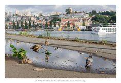 [2014 - Porto / Oporto - Portugal] #fotografia #fotografias #photography #foto #fotos #photo #photos #local #locais #locals #cidade #cidades #ciudad #ciudades #city #cities #europa #europe #baixa #baja #downtown #rio #river #douro #duero @Visit Portugal @ePortugal @WeBook Porto @OPORTO COOL @Oporto Lobers
