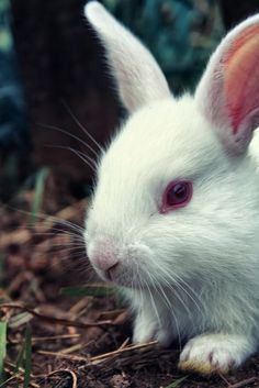 Free Image on Pixabay - Rabbit, Closeup, Nature, Bunny Free Pictures, Free Images, Rabbits, Close Up, Wildlife, Landscape, Pets, Nature, Animals