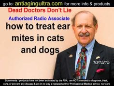 Ear Mites in Cats and Dogs: Natural Solutions - YouTube