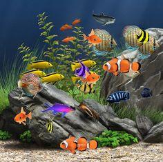 Aquarium ..