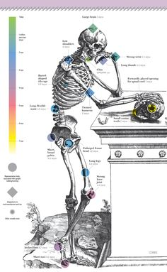 What Makes Humans Special? by scientificamerican: HALLMARK TRAITS of the human body did not all arise anew in our species. Instead they emerged piecemeal in our forebears over millions of years. Many of these traits seem to have helped support two defining trends in our evolution: upright locomotion and tool use. #Infographic #Human_Body #Evolution