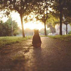 Sunset Boulevard. (by BeboFlickr)