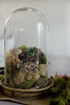 Cloche terrarium