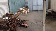 RC Car Entertains Dogs