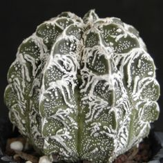 http://durhambotanicals.com/product-category/cactus/