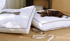 Four-legged travel buddies deserve some pampering too! Treat them to the Westin's Heavenly Dog Bed during your stay at The Westin Galleria Dallas! www.thewestingalleriadallas.com