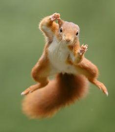 Squirrel Art, Cute Squirrel, Squirrels, Farm Animals, Funny Animals, Racoon, Weird And Wonderful, Chipmunks, Funny Cute