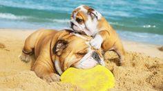 #Spiagge per #cani in #Italia: in #vacanza con Fido senza stress