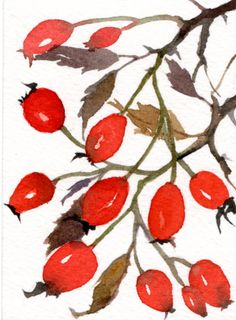 Rose hips, Original Aceo watercolor painting, Artist trading card, countryside, red berries, autumn, wild garden, rose garden, rose bush