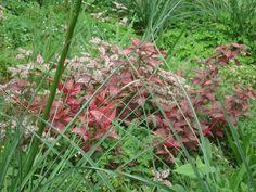 No idea of the name of these plants, but they are beautiful anyway! At Parque Nacional El Boquerón, El Salvador