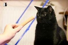 #cats #neko #gato