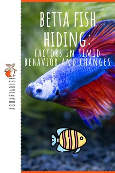 Every betta fish has his own unique personality, just like you and your friends do! However, most bettas do react in similar ways in the same situations. In this article, we discuss the reasons why betta fish hide, and we find out why you should provide your pet with lots of hiding places in his tank.
