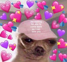 33 Ideas funny love memes for him boyfriends faces for 2019 Dog Memes, Memes Humor, Funny Memes, Crush Memes, Cute Love Memes, Funny Love, Cute Memes For Her, In Love Meme, I Miss You Meme