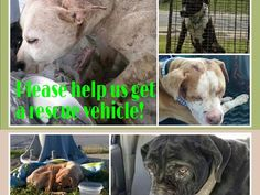 "Oct 28, 2015 — ***CHALLENGE*** If you HATE Detroit Animal Control and want to make a REAL DIFFERENCE, we challenge 1,000 of our supporters to donate just $5 (or more) to Detroit Pit Crew- THE ONLY RESCUE GROUP IN DETROIT PULLING DOGS OFF THE STREETS AND TAKING THEM FAR FROM DETROIT!!! If they get this van they can only HELP MORE DETROIT STRAYS-- PLEASE MENTION ""CCDDC"" IN YOUR DONATION SO WE CAN GET SOME ""glory"" and ""LOVE"" from DPC!!!"