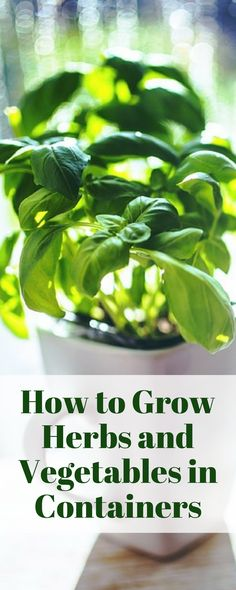 How to Grow Herbs and Vegetables in Containers