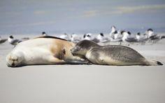 The Best Wildlife Tours in Australia for 2020 - Blue Sky Wildlife Tour Around The World, Kangaroo Island, South Australia, Mammals, Lions, Dogs And Puppies, Wildlife, Sea, Blue