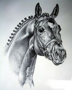 Marvelous Drawing Animals In The Zoo Ideas. Inconceivable Drawing Animals In The Zoo Ideas. Horse Drawings, Animal Drawings, Cool Drawings, Pretty Horses, Beautiful Horses, Horse Oil Painting, Youtube Drawing, Unicorn Drawing, Horse Farms
