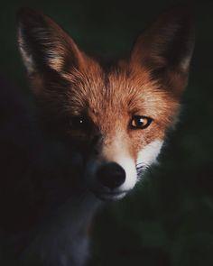 Awesome_Animal_Portraits_by_Wildlife_Photographer_Konsta_Punkka_2016_10